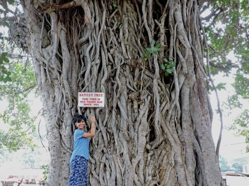 This Banyan tree is 1,400 years old!