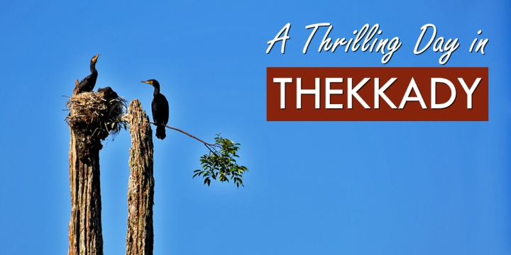 A Thrilling Day in Thekkady