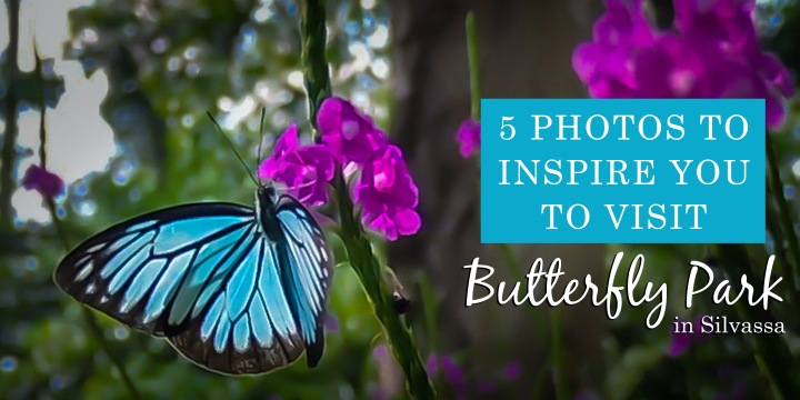 5 Photos to Inspire You to Visit the Butterfly Park in Silvassa